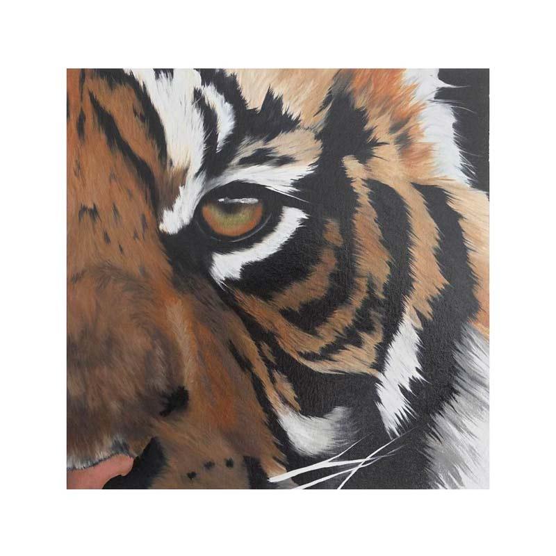 tigre - Le Passionné